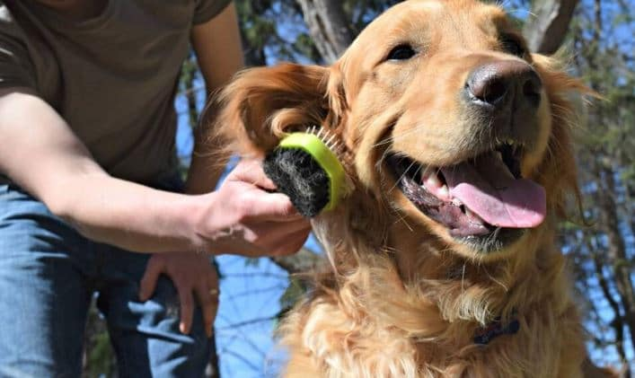 Best Dog Brush For A Golden Retriever
