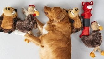Best Interactive Dog Toys for Your Golden Retriever